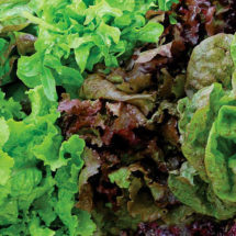 Heirloom Lettuce Mix