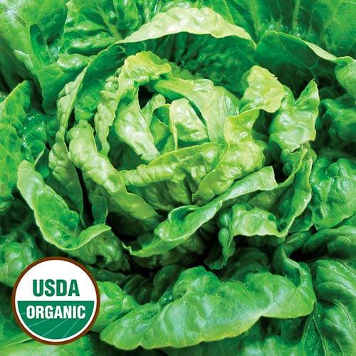 Winter Density Lettuce