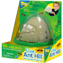 Live Ant Hill Kit