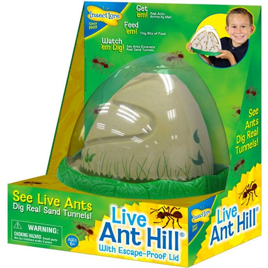 Live Ant Hill Kit