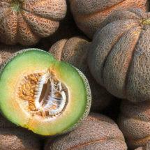 Melon, Early Hanover