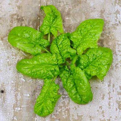 Spinach, Merlo Nero