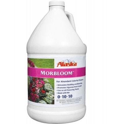 Alaska MorBloom
