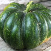 Pumpkin, Musquee de Provence