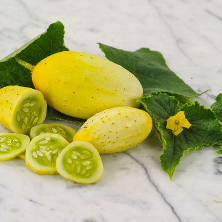 Cucumber, Old Time White