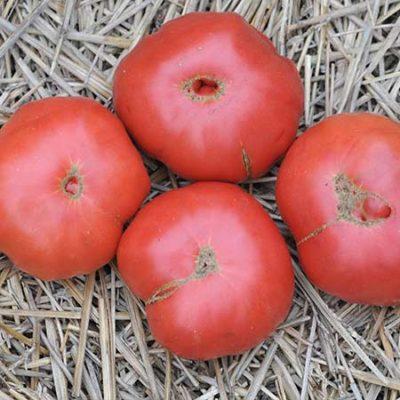 Tomato, Omar's Lebanese