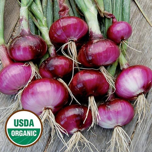 Onion, Red Wethersfield