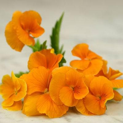 Pansy, Orange Sun
