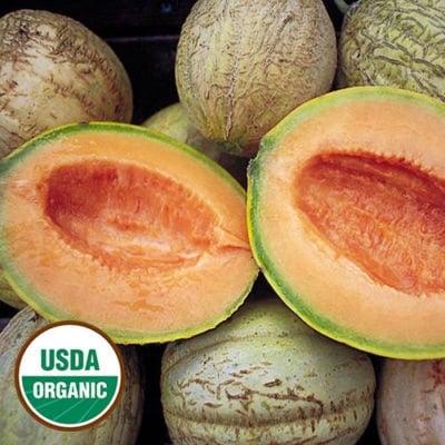 Melon, Amish
