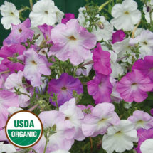 Petunia, Old Fashioned Vining