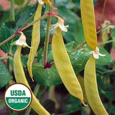 Pea, Golden Sweet Edible Podded