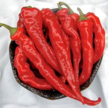 Pepper, Hot Portugal