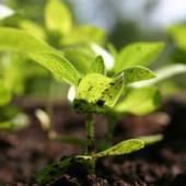 Organic soil ph adjustment planet natural - Nature s care organic garden soil ...
