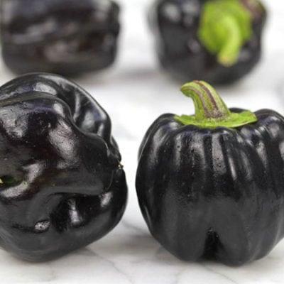 Pepper, Purple Beauty