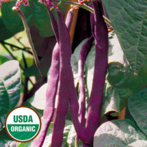 Bean, Purple Podded Pole