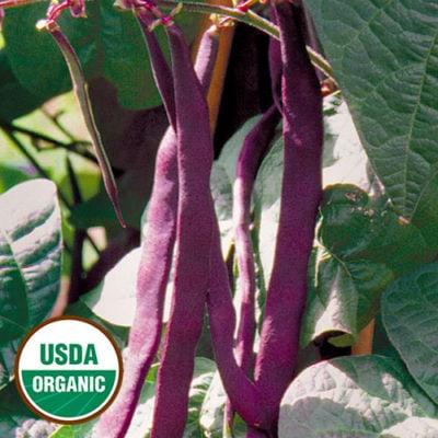 Bean, Purple Podded Pole