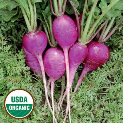 Radish, Plum Purple