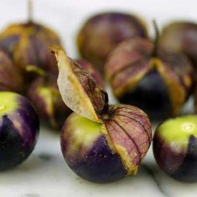 Tomatillo, Purple
