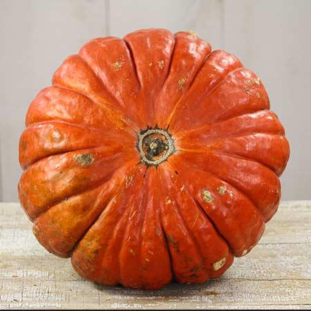 Pumpkin, Rouge Vif d'Etampes