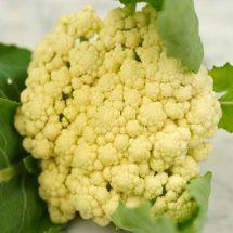 Cauliflower, Snowball