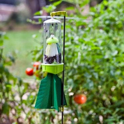 Stink Bug Trap