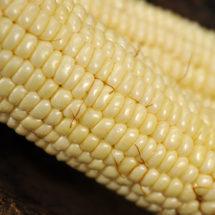 Corn, Stowell's Evergreen (Baker Creek)