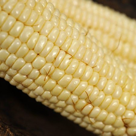 Corn, Stowell's Evergreen (Baker Creek)
