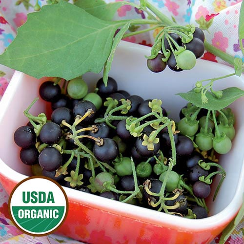 Sunberry Seeds
