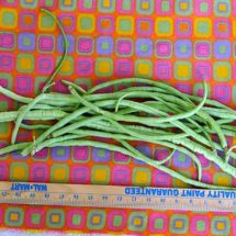 Long Bean, Thai White Seeded