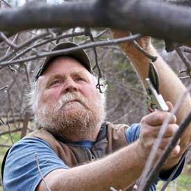 Tree Care & Shrubs