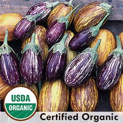 Eggplant, Udumalapet