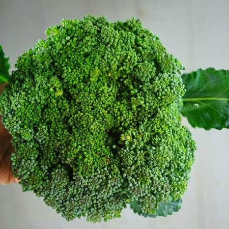 Broccoli, Waltham 29