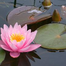 Pond Care