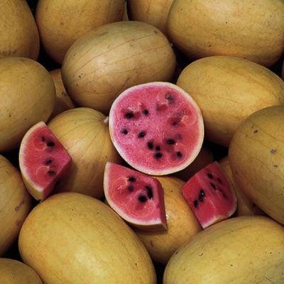 Watermelon, Golden Midget