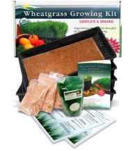 Wheatgrass Growing Kit