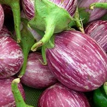 Genetically Modified Eggplant Failure | Planet Natural