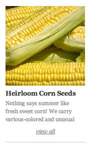 Heirloom Corn Seeds
