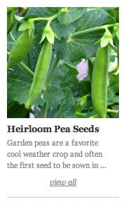 Heirloom Peas