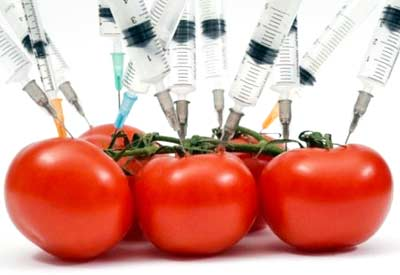 GMO Failure: The Flavr Savr Tomato | Planet Natural