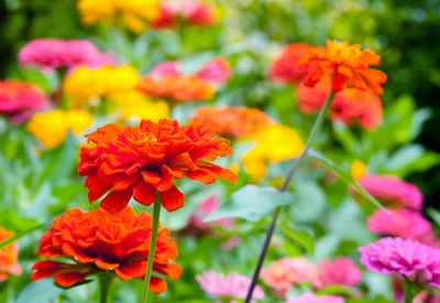 late blooming flowers for summer color planet natural