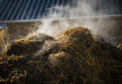 Composting Manure