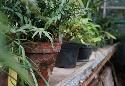 Overwintering Potted Plants