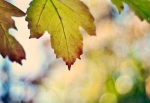november-gardens