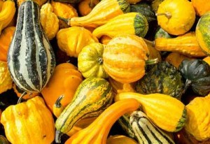 ornamental-gourds