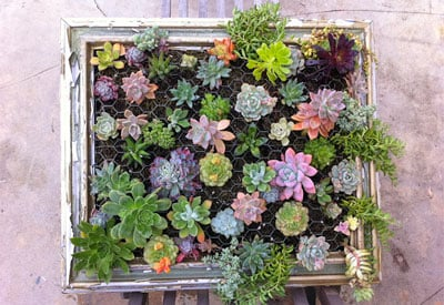 How To Make A Succulent Frame Planet Natural
