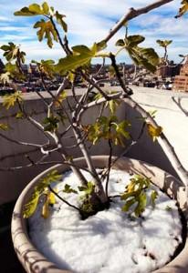 wintering-plants