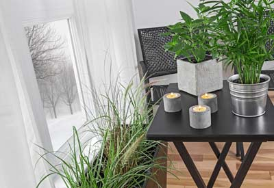 How to Take Care of Houseplants in Winter | Planet Natural House Plant For Dark Room on house plants for stairs, house plants for bathrooms, house plants for hallways, plants for low light rooms, plants that like dark rooms, house plants for offices,