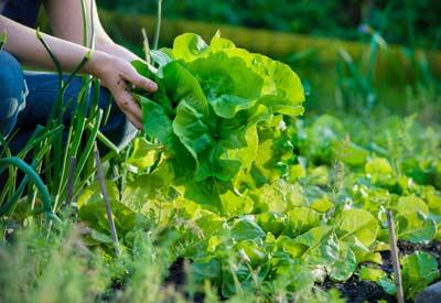 Rotating Garden Crops