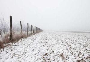 winter-soil