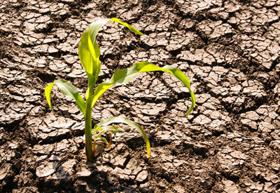 Drought in the Garden